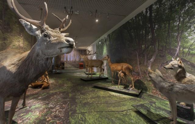 Musées cantonaux, Sion; D.Emery